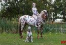 Dalmatiner-Bodypainting-Shooting – Teamwork der besonderen Art