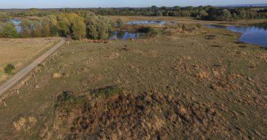 Spannungsfeld Weseraue: Artenschutz und Jägerei in der Weseraue