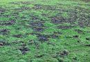 Aus dem Leben Petershäger Wildschweine – Konflikte mit dem Naturschutz und den Zielen der Schutzgebiete