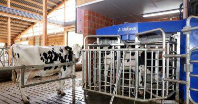 Ein Jahr auf dem Bauernhof – Qualitätsprodukt Milch
