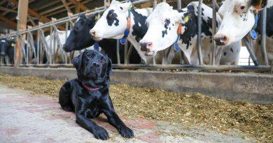 Zu Besuch bei den Milch-Experten in Heisterholz