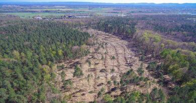 12.000 neue Bäume für den Heisterholzer Wald