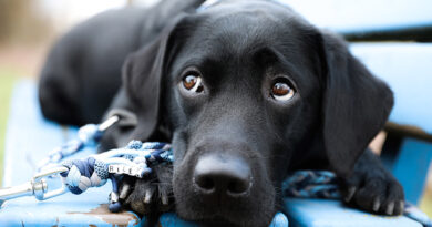 Redaktionshund Riley erzählt – 3,2,1 … Hundeblick