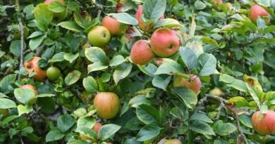 Gut Neuhof vergibt Patenschaften für neue Obstbäume