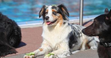 Hundeschwimmen mit Wellness