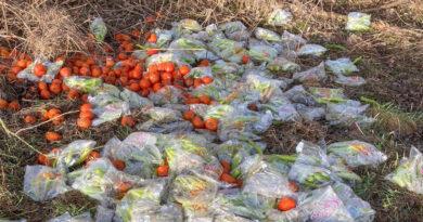 Unbekannte entsorgen Gemüse in der Natur