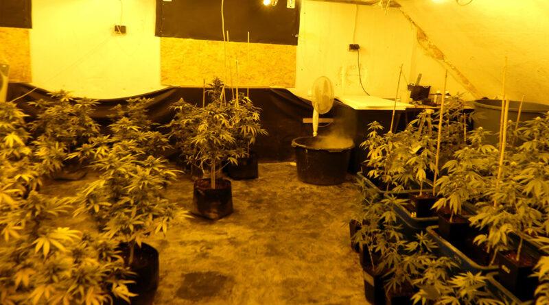 Polizei hebt Drogenplantage in Petershagen-Döhren aus und nimmt Betreiber fest